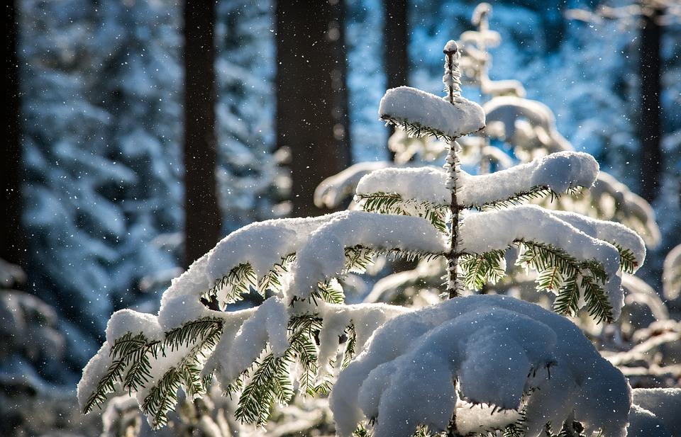zimní_příroda
